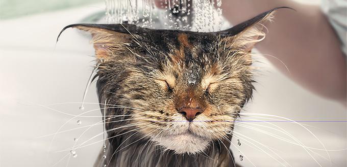 cat hating bath