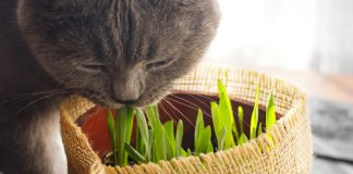 catnip for cats - the ultimate guide
