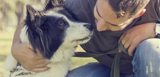 dog care and maintenance