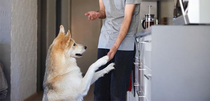 dog house tricks