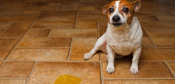 dog on the kitchen tiles