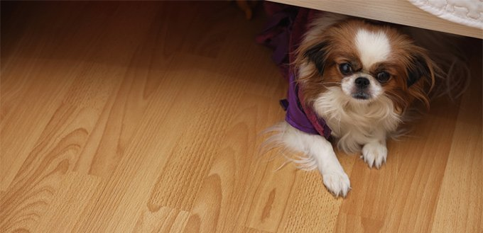dog playing hide & seek