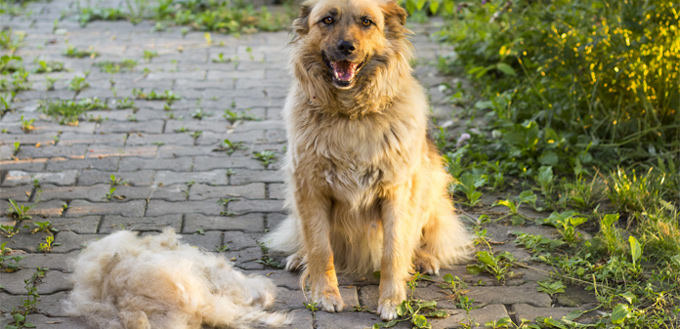 Natural Ways To Brush Your Dog