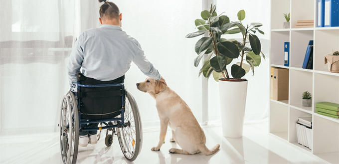 dog with disabled family member