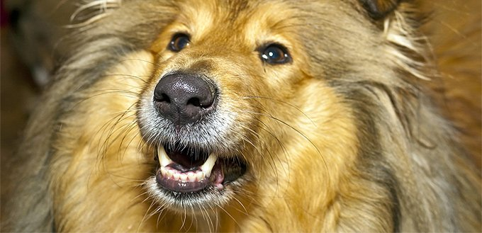 dog with whiskers