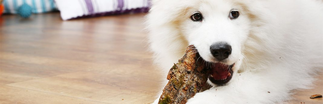 elk antler dog chews - are they safe