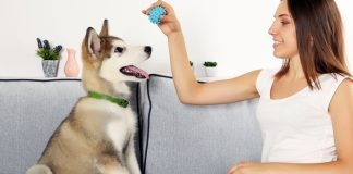 essential tips to exercise your dog indoors