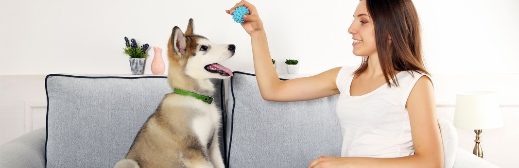essential-tips-to-exercise-your-dog-indoors