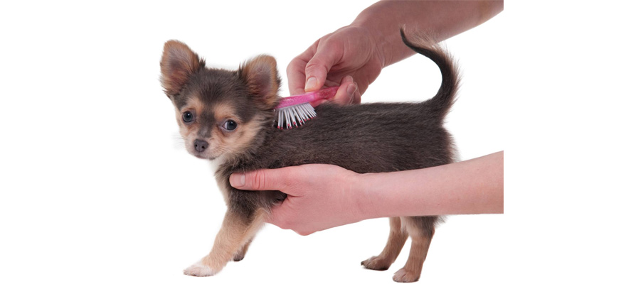 flea dog comb