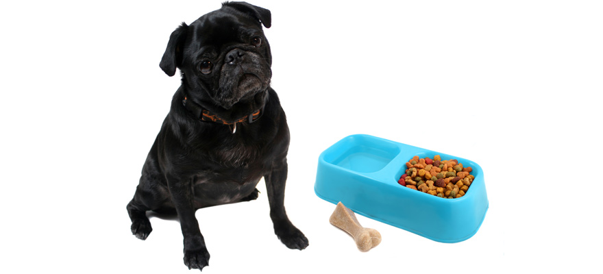 food for pugs