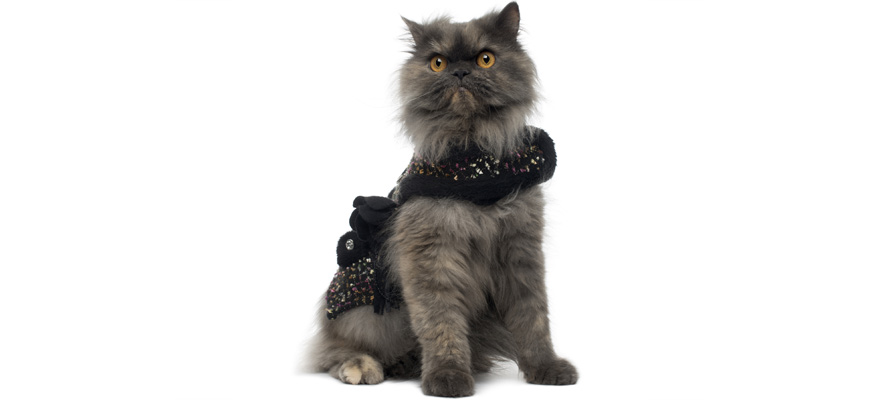 harnesses for kitties