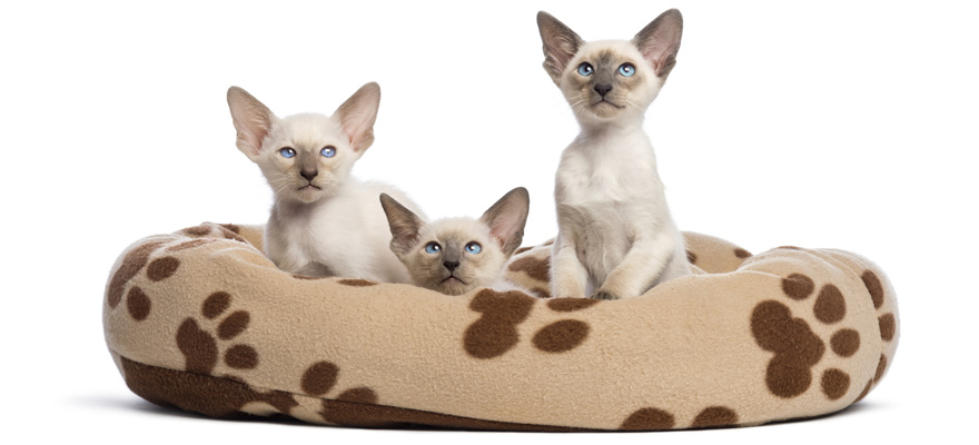 heated beds for cats