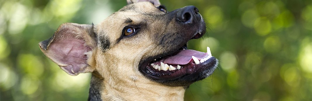 how to treat a broken tooth in dogs