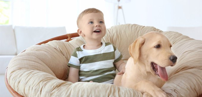labrador retrievers for babies