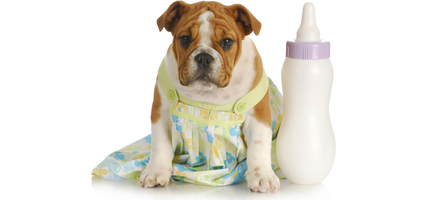 milk replacer for dog