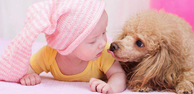 poodles for babies