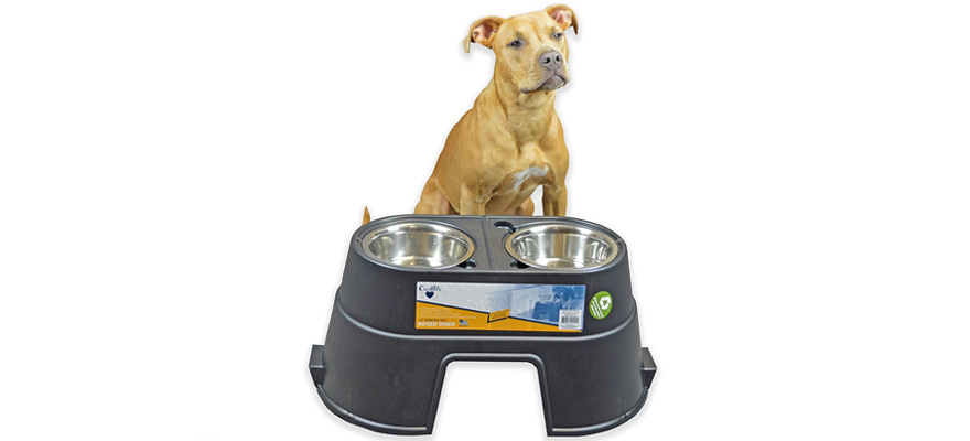 raised dog bowl