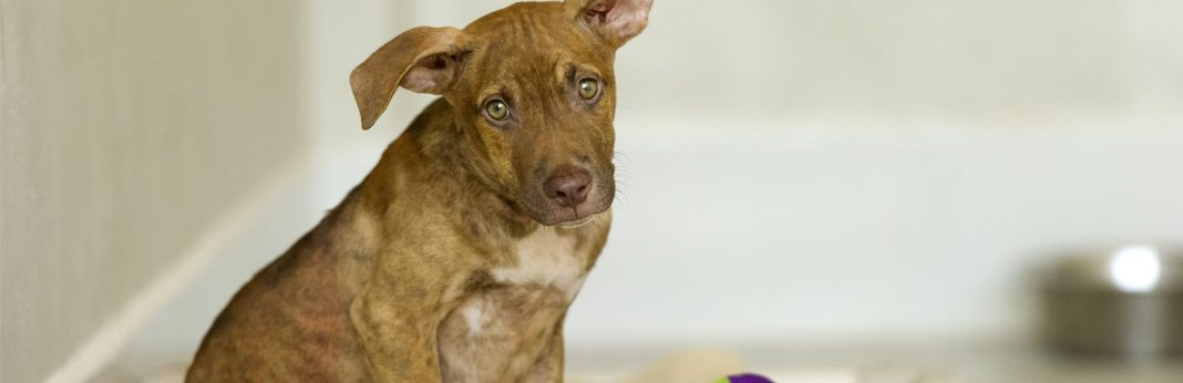 10 reasons you should adopt a shelter dog