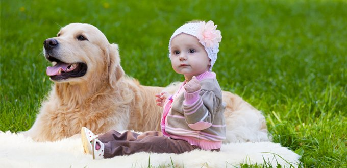 retrievers for babies