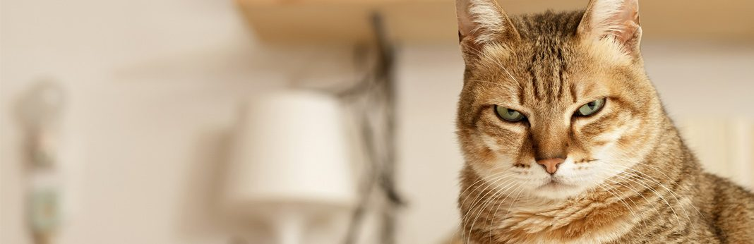 things cats hate - what to avoid doing