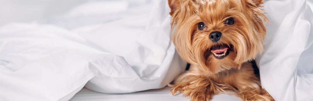 tips-for-cleaning-dog-beds