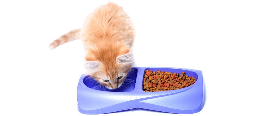 water bowl for felines