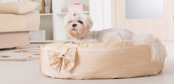ways to wash dog's bed