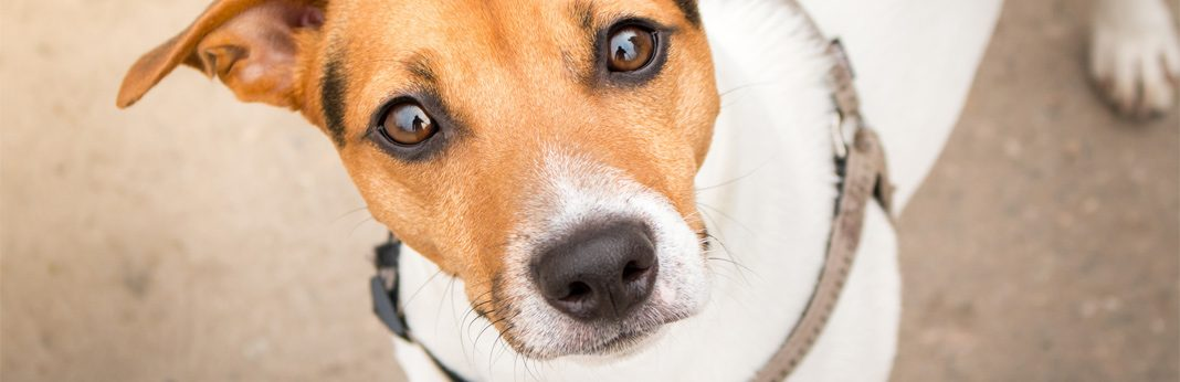 why do dogs have whiskers