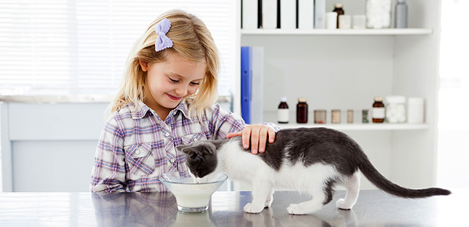 Can Cats Eat Yogurt Nutrition Guide