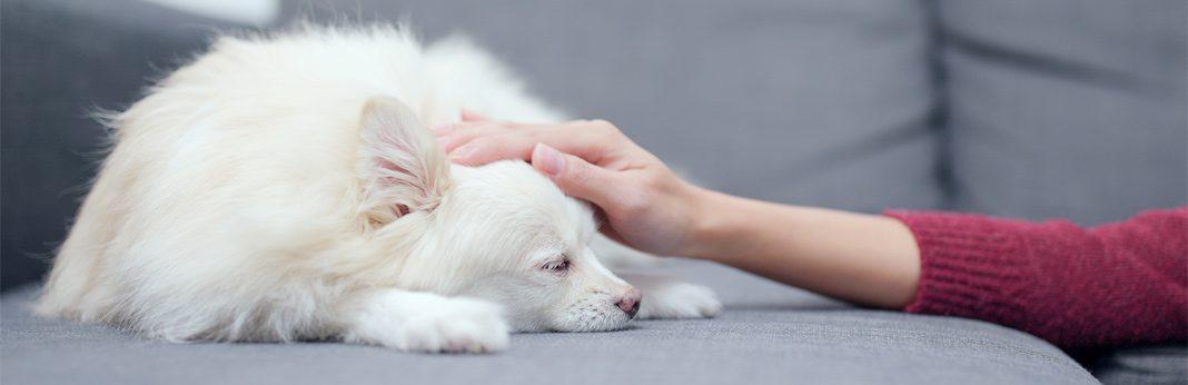 25 dog health warning signs