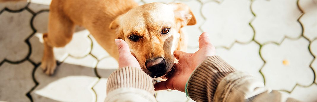 5 common shelter dog behavior problems