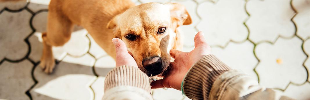 5-common-shelter-dog-behavior-problems