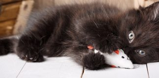 5 simple cat games your kitty will go crazy for