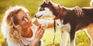 Can My Dog Eat Ice Cream
