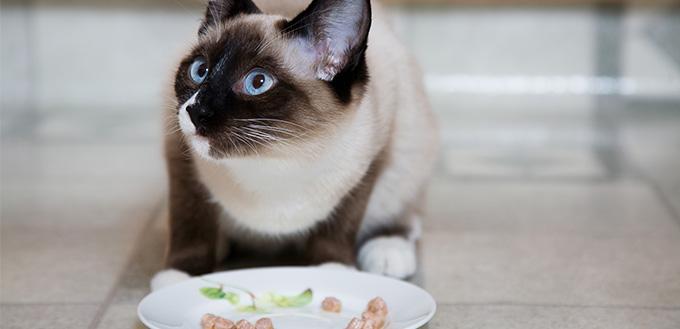 Choose the Best Cat Food