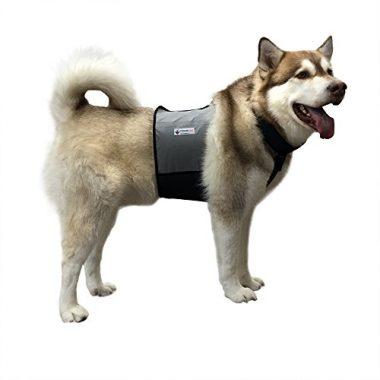 Cooler Dog Cooling Vest and Cooling Collar
