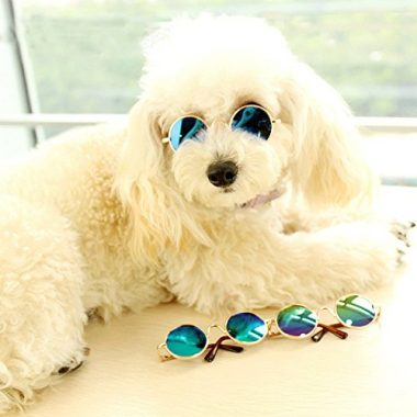 Cydnlive Cool Stylish and funny Cute Pet Sunglasses