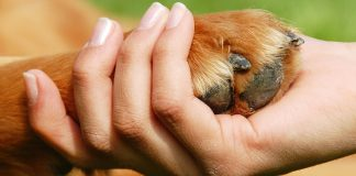 Dog Yeast Infection on Paws