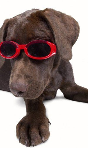 Doggles ILS Pink Frame with Pink Lens