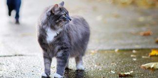 Feline Depression: Is Your Cat Sad