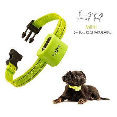 Floyd Small Dog Bark Collar for Tiny Puppies to Medium Dogs