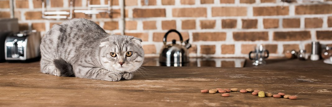 How-to-Choose-the-Best-Cat-Food