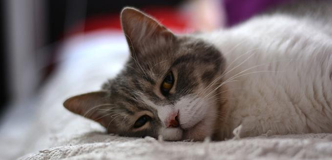 Is Your Cat Sad