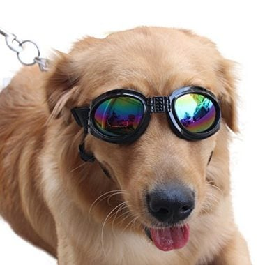 QUMY Dog Sunglasses Eye Wear Protection