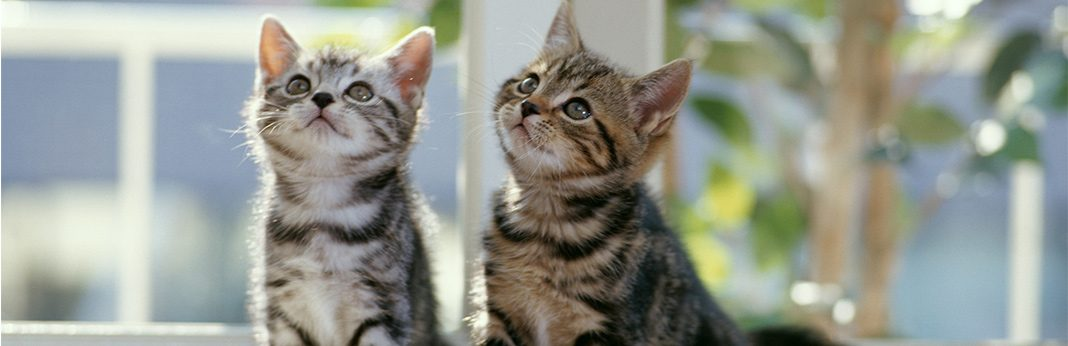 Understanding Cat Behavior and Body Language