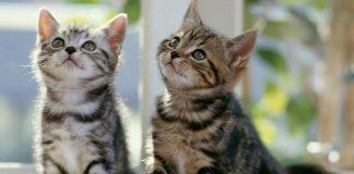 Understanding Cat Behavior and Body Language