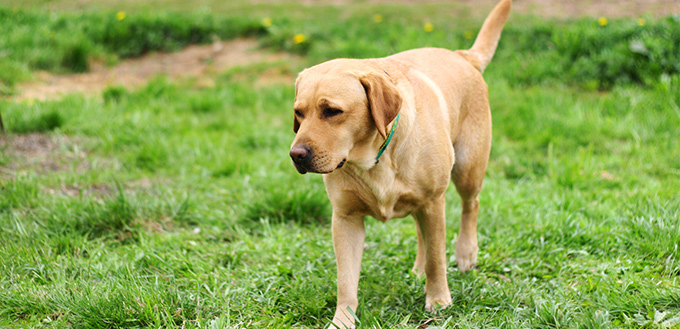 What Causes Reverse Sneezing in Dogs
