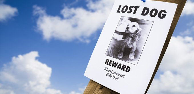 announcing a lost dog