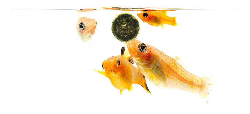aquarium skimmers
