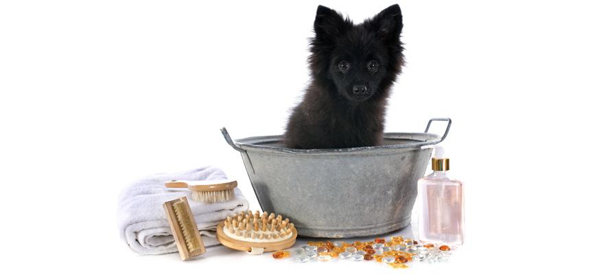 bath tub for pooches